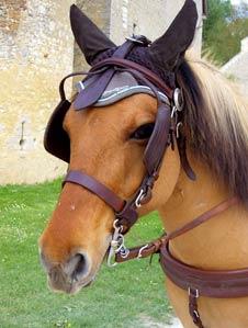 cheval centre équestre