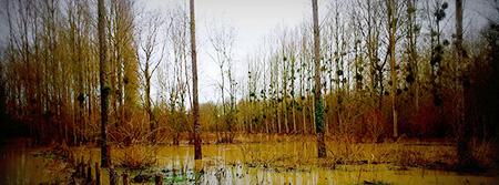 LoireXplorer crue vallée de la Loire