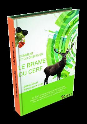 guide pratique Comment et où observer le brame du cerf en région centre