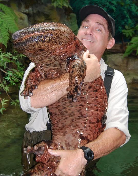 salamandre géante
