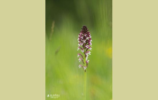 http://loirexplorer.com/orchidee-sauvage-val-de-loire/