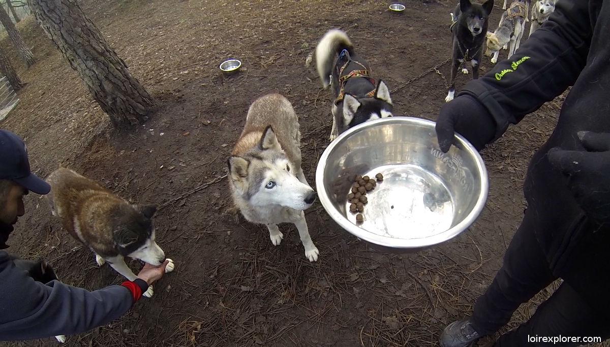 cani kart touraine chien de traineau husky sibérien latitude Nordique récompense
