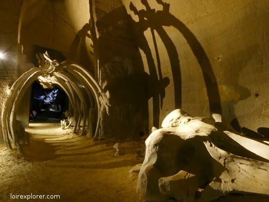 mystère des faluns site troglodytique Doué la Fontaine baleine fossile