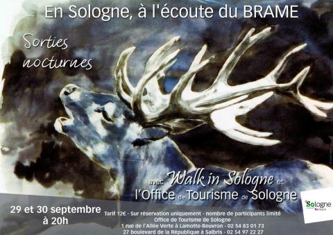 Balade nocturne en Sologne à l'écoute du brame - cerf encre copyright-yseult-carre