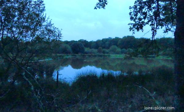 sortie brame du cerf en Sologne étang